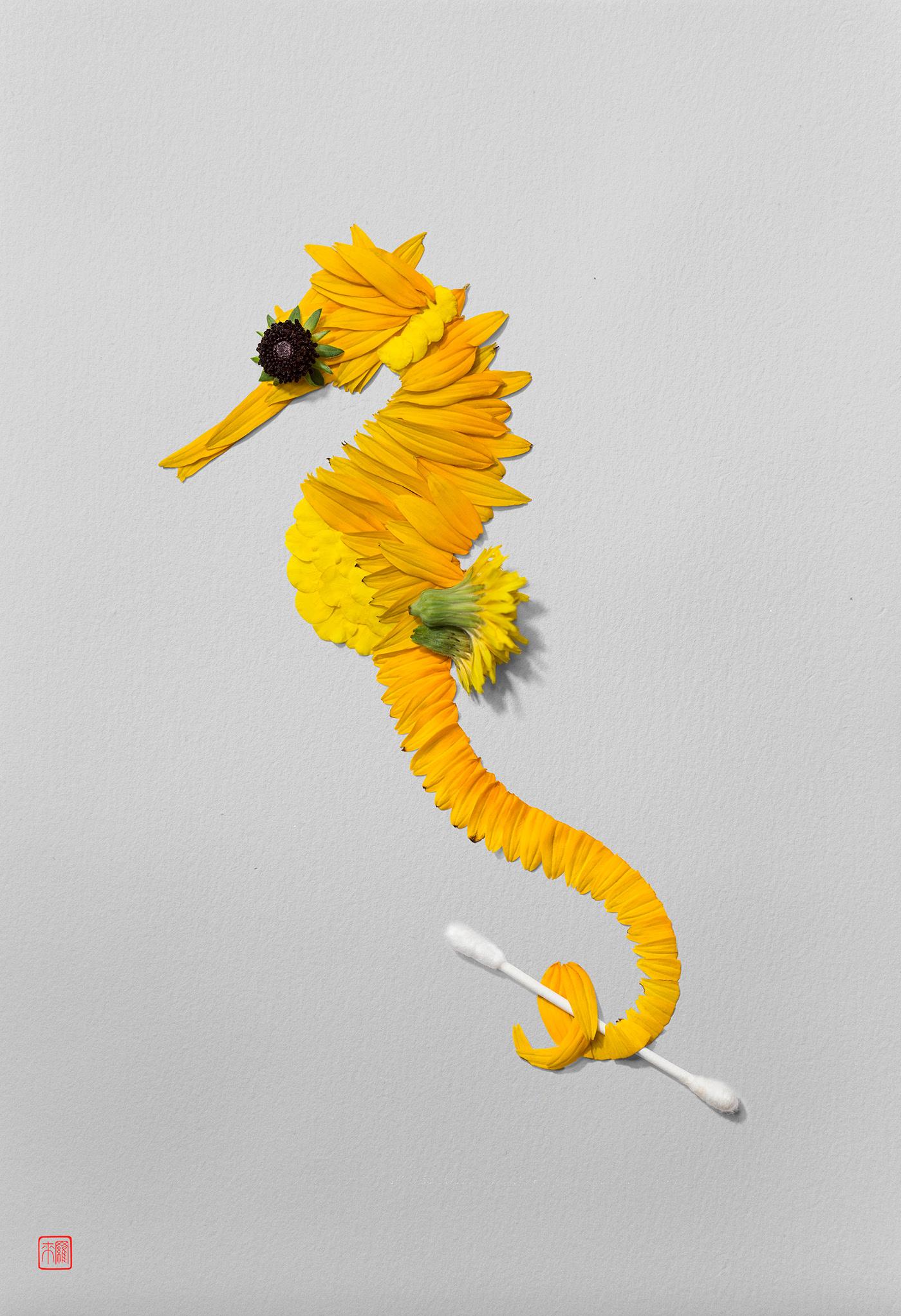 advertising ideas seahorse by raku inoue