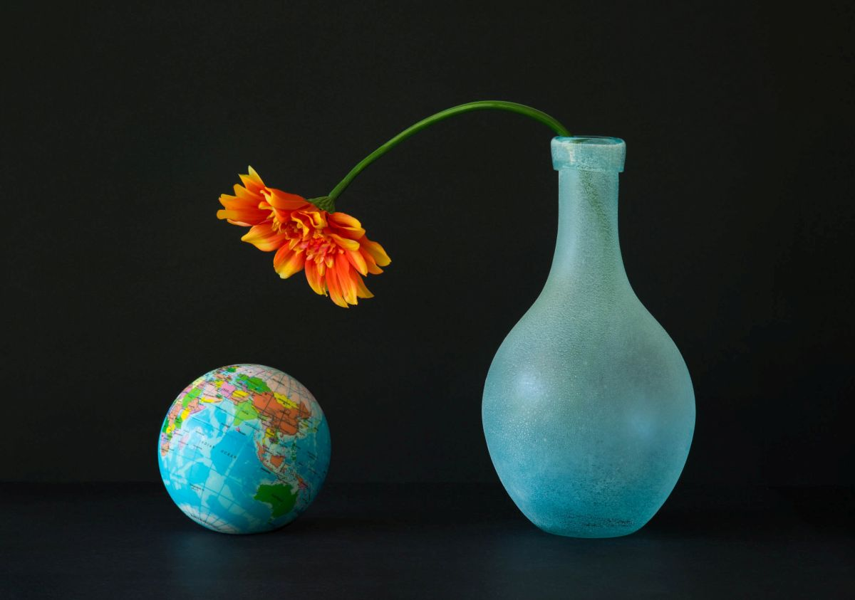 still life photography earth by jacqueline hammer