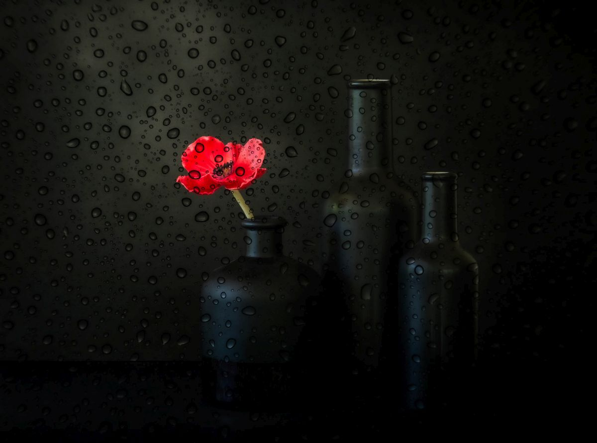 still life photography rainy day by jacqueline hammer