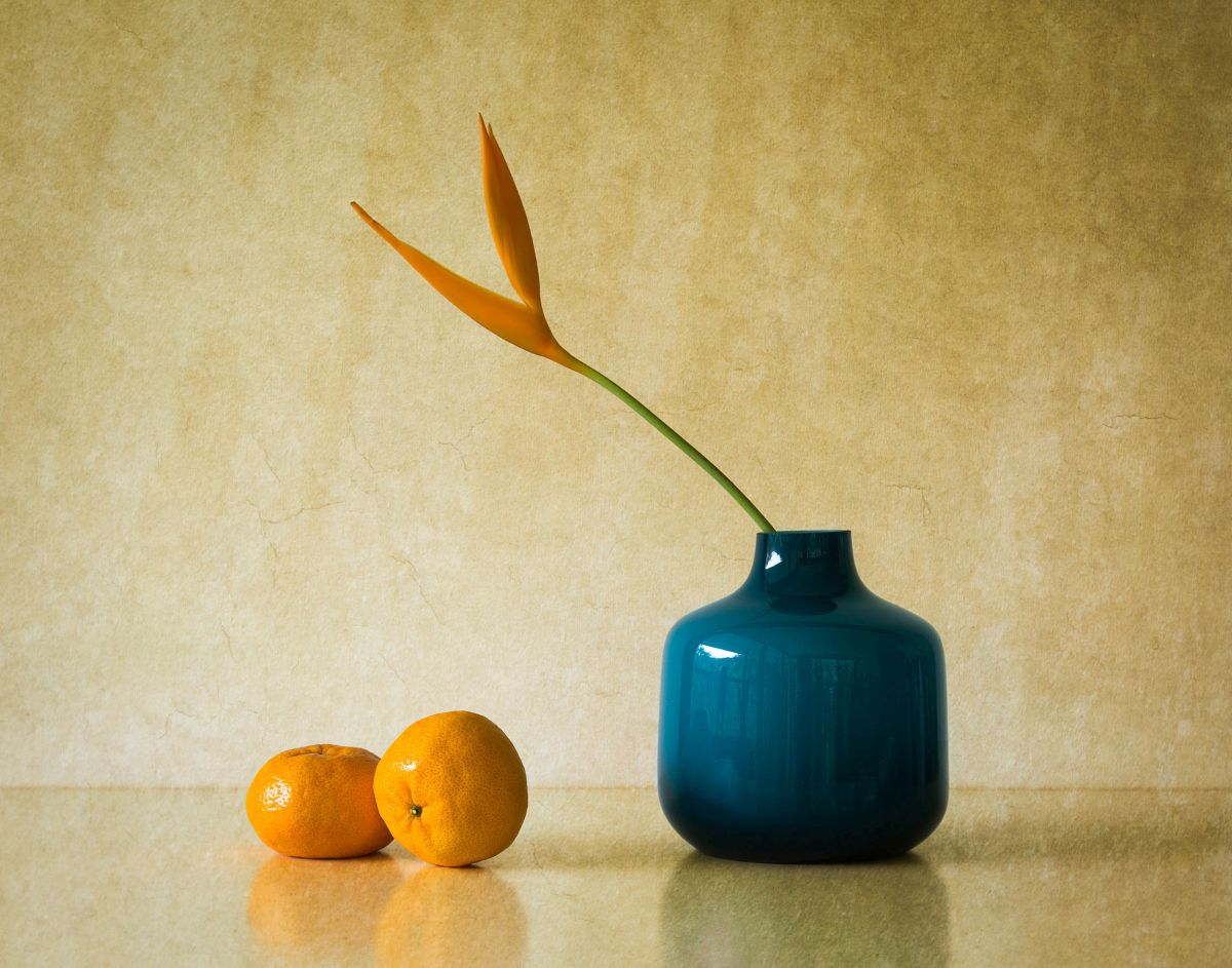 still life photography blue vase by jacqueline hammer