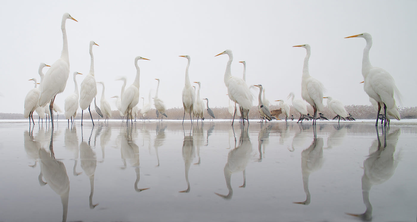 symmetry photography nature cranes walk by georg scharf