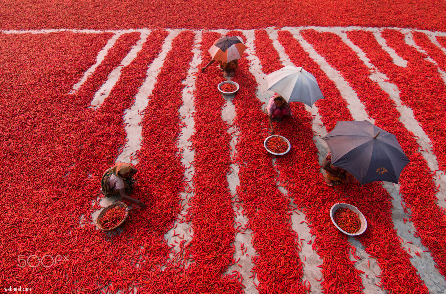 aerial photography red chilly picker by azim khan ronnie