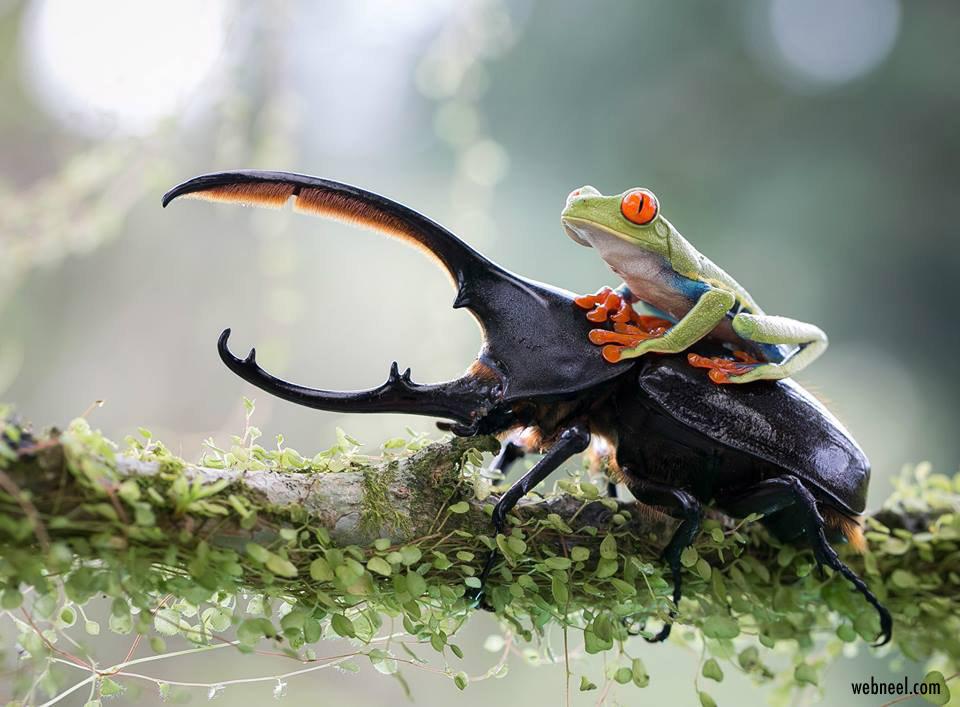award winning wildlife photography nicolas