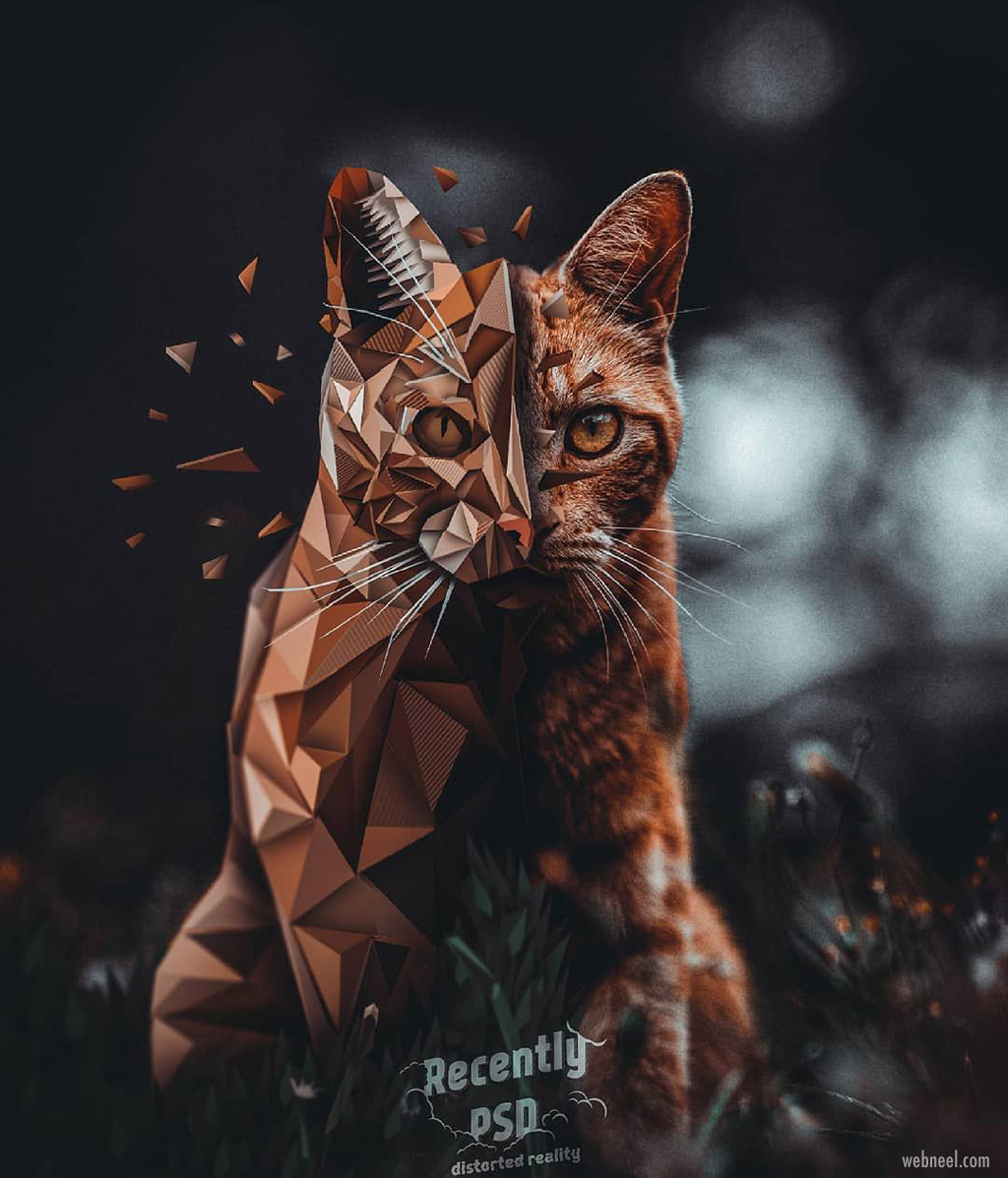 photo manipulation vector illustration distorted cat by artem gusev