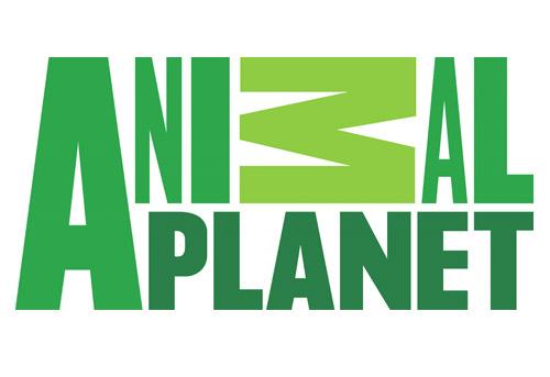 logo design 4