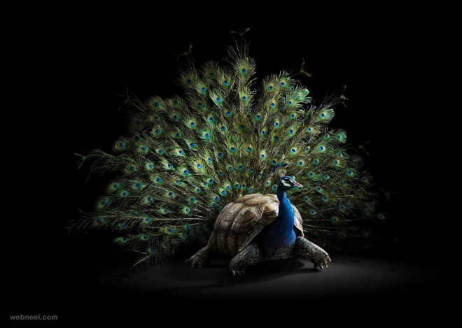 peacock animal photo manipulaiton by dimitri