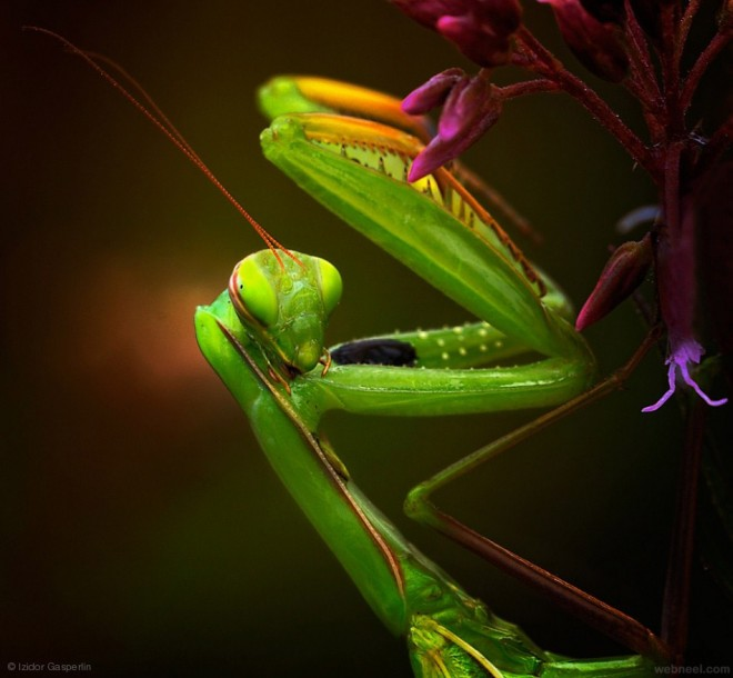 vivid color colorful photography