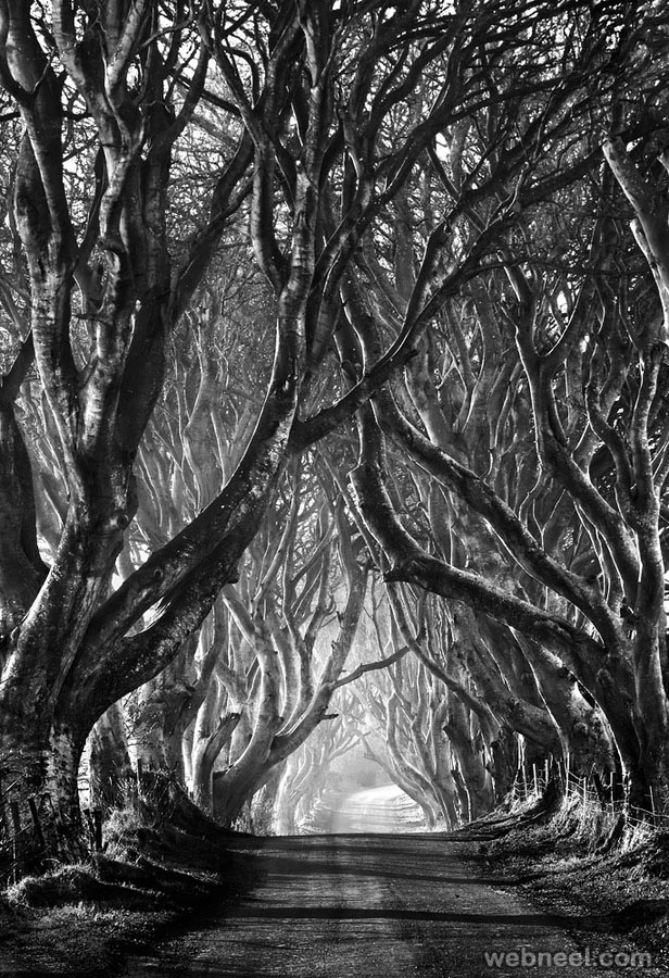 tree black and white photography
