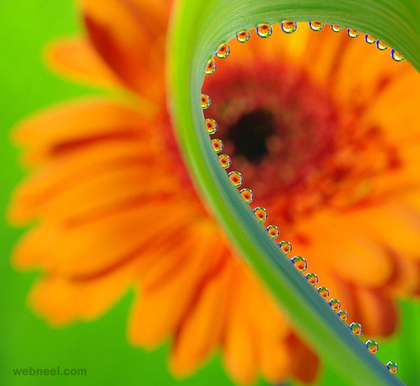 flower reflection photography