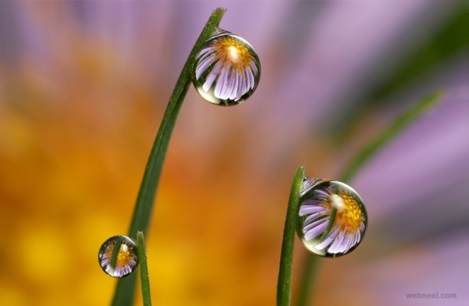 flower water drop reflection photography