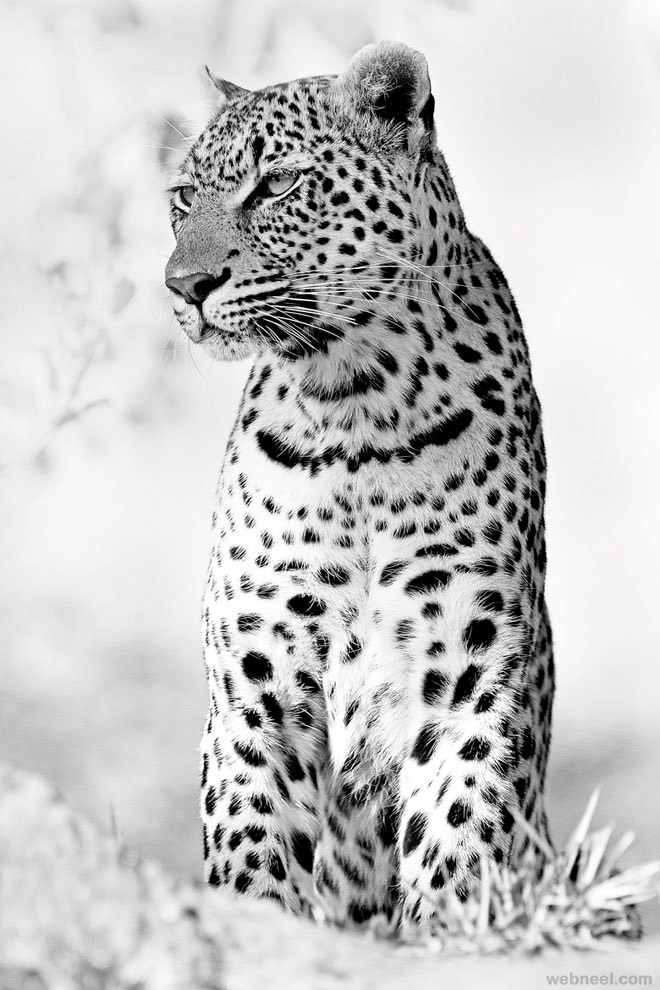 animal black and white photography by rudi hulshof