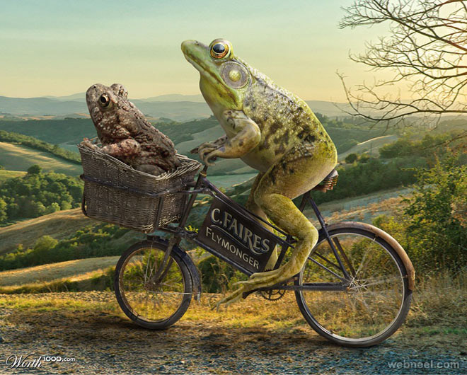 frog takes toad for a ride photo manipulation by
