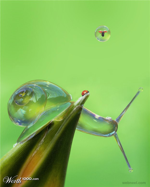 water snail photo manipulation by brunosousa
