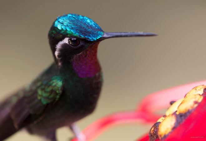 honey bird photography by piccaya