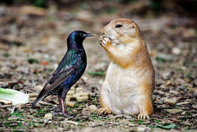 squirrel wildlife photography by scott spaeth