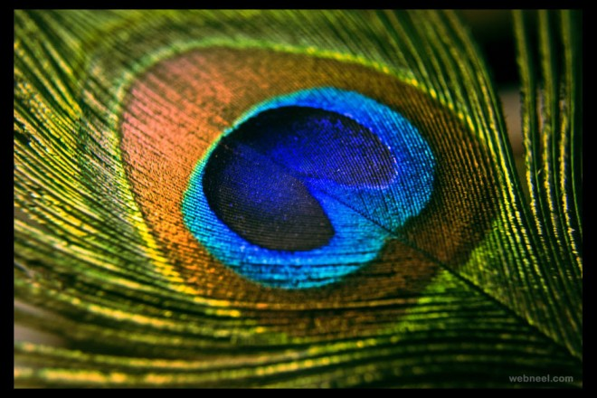 peacock feather by eternallyenvious