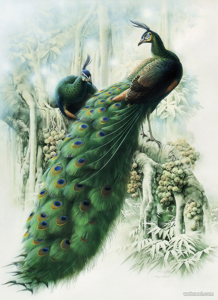 bird painting by peacock
