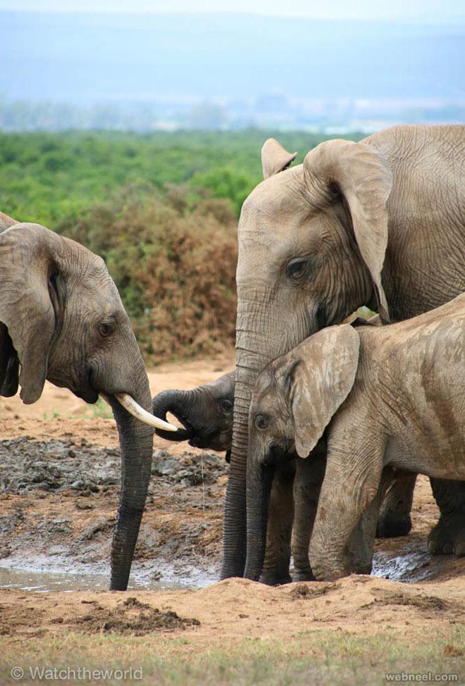 africa elephant wildlife photography