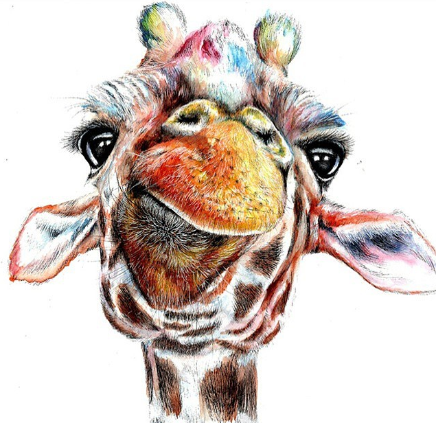 giraffe color pencil drawing by abigal leigh