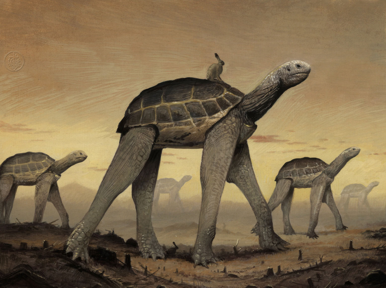 surreal artwork tortoise