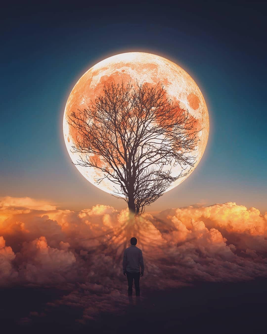 adobe photoshop creative cloud tree of hope