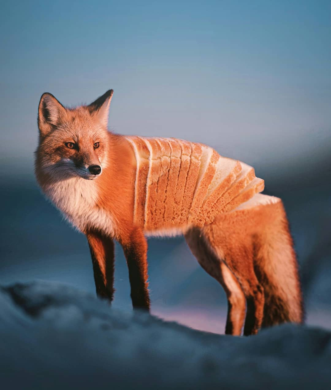 photomanipulation fox