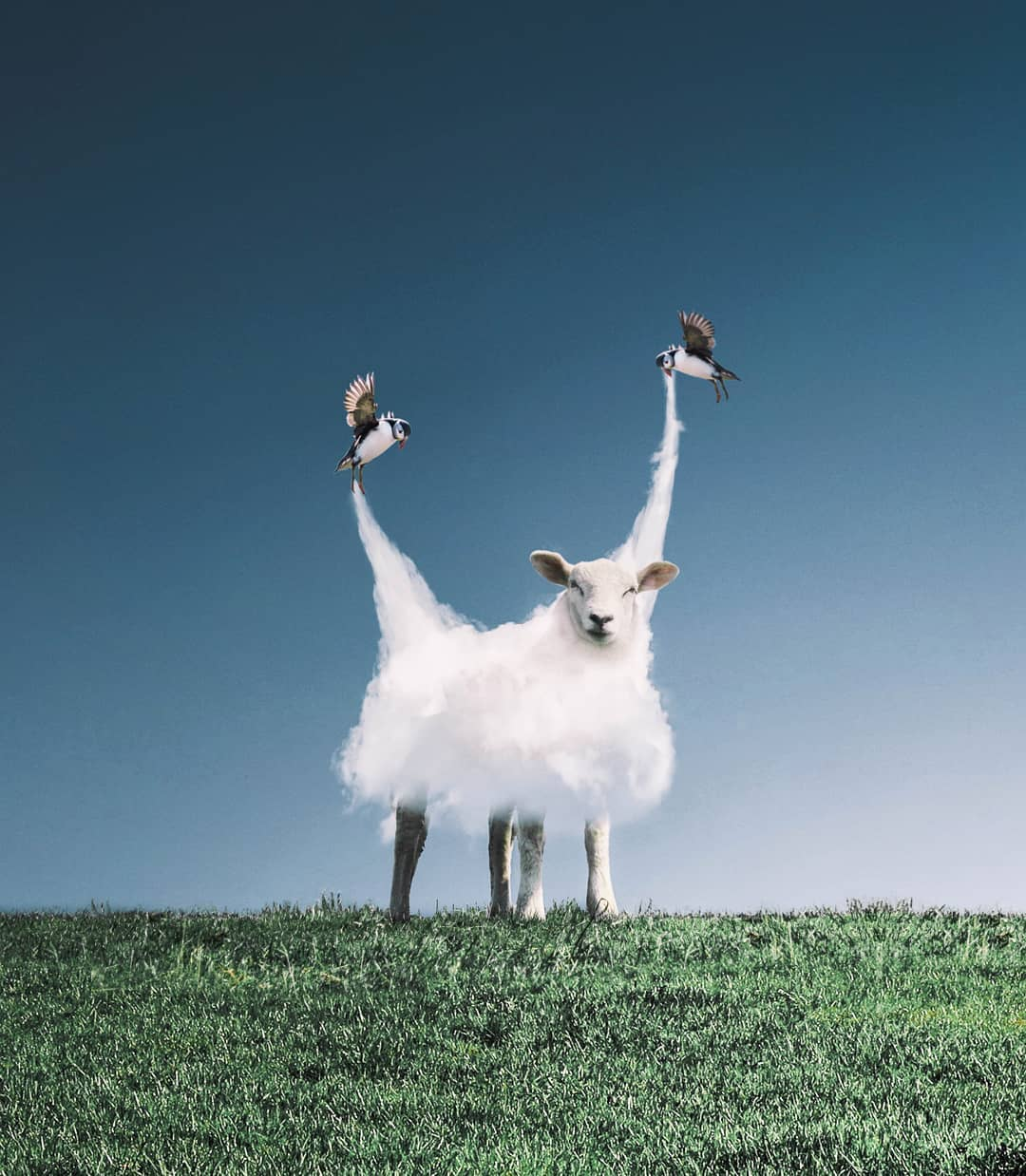 photomanipulation sheep