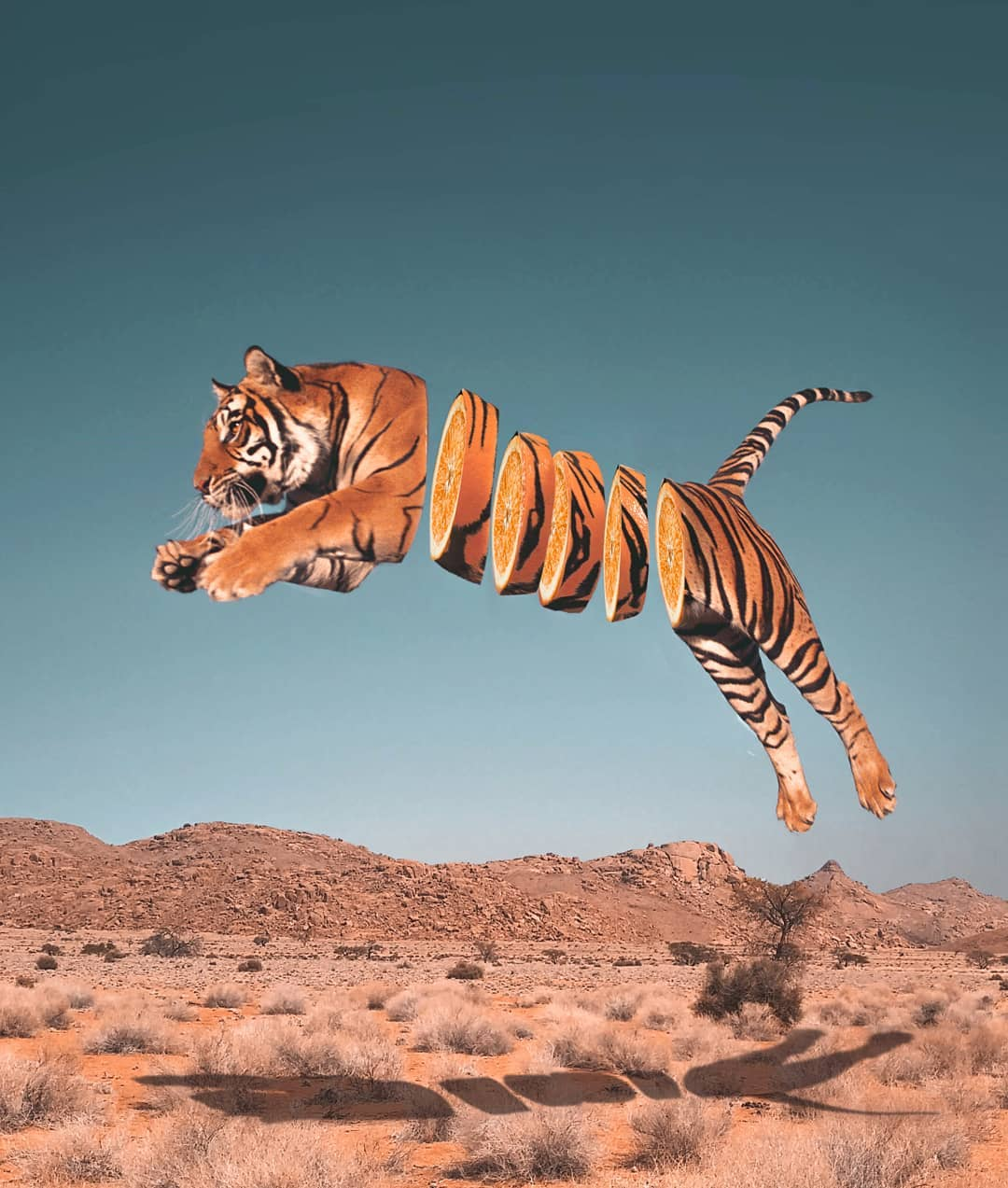 photomanipulation tiger