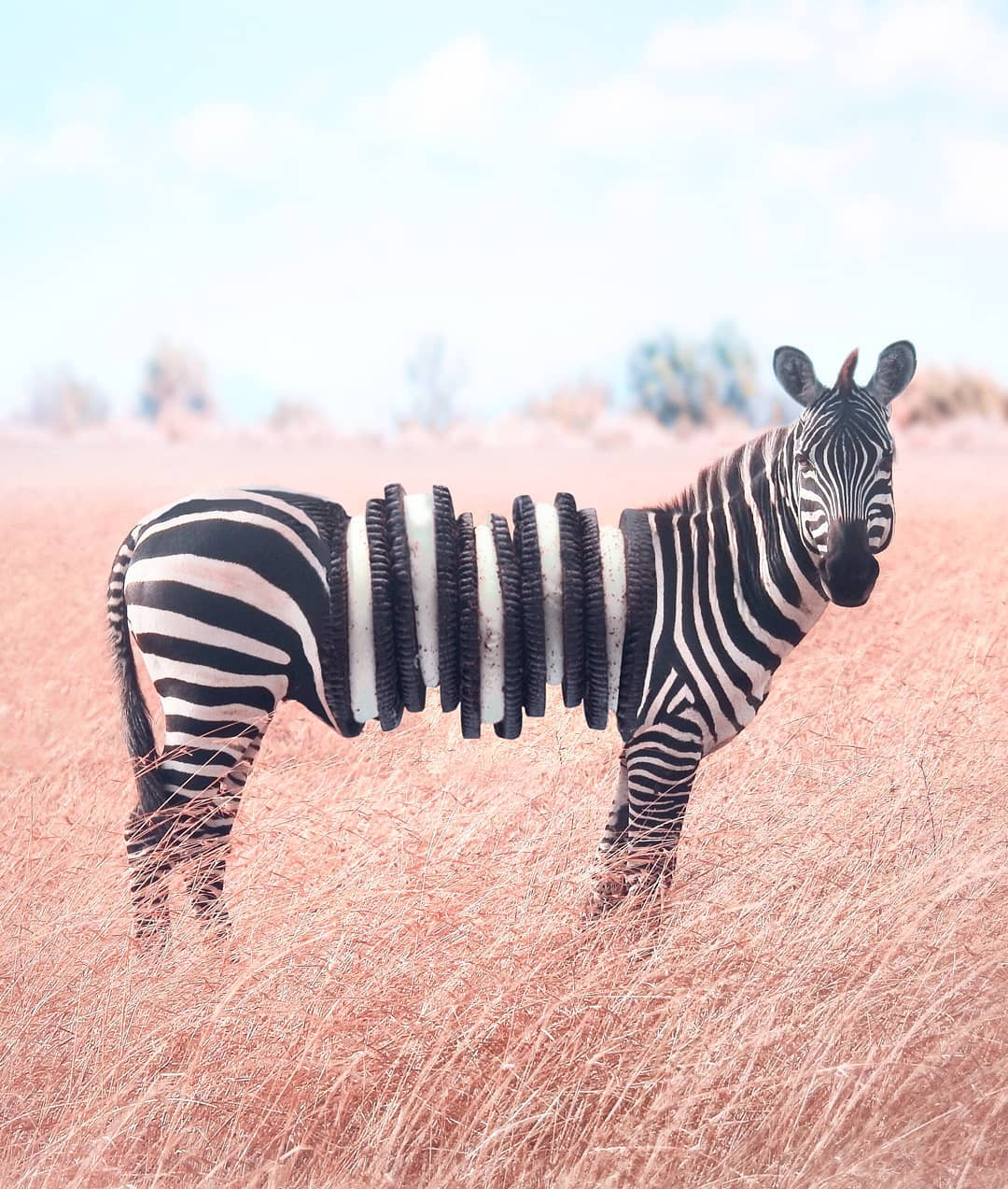 photomanipulation zebra by ronald ong