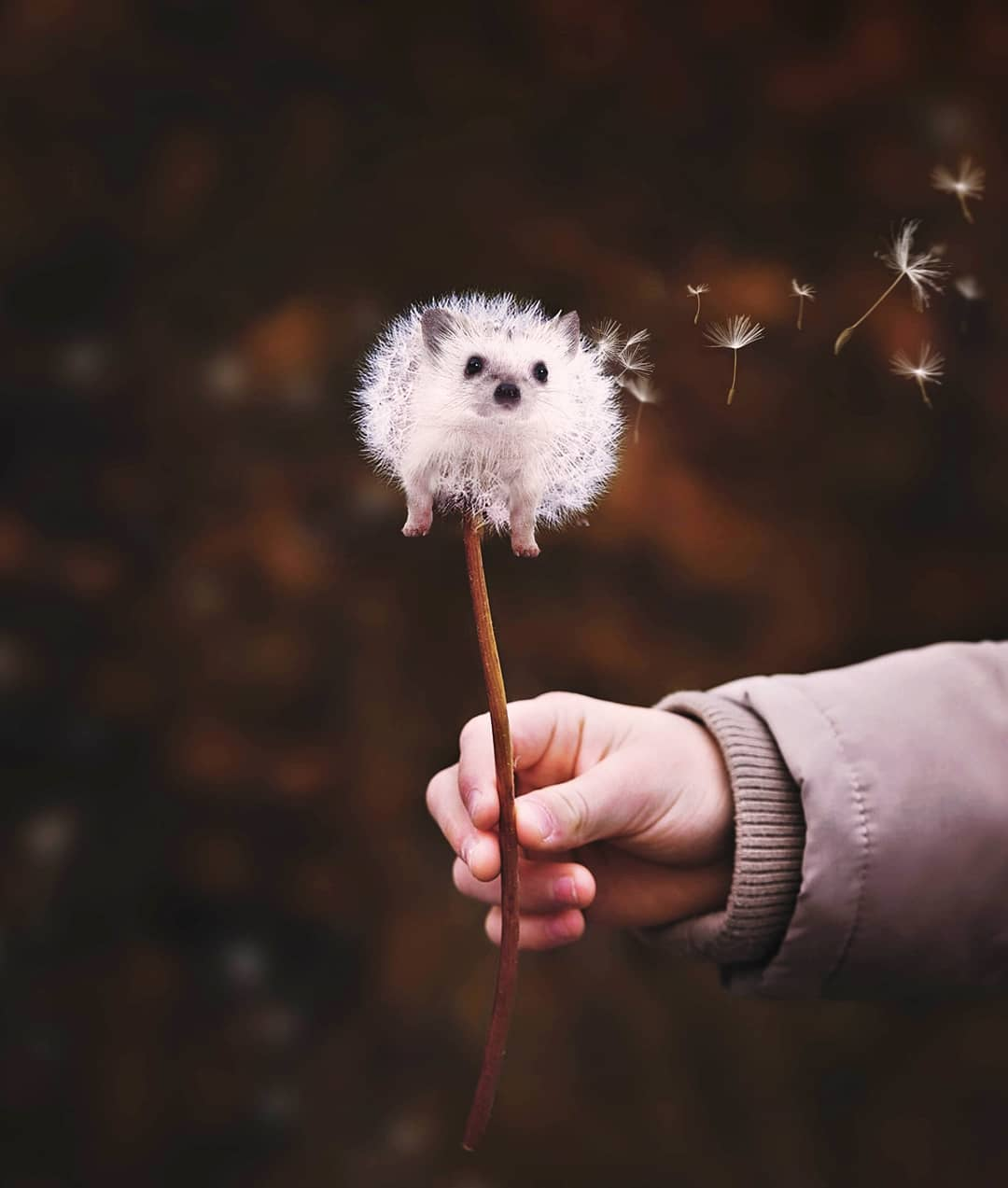 photomanipulation dandelion