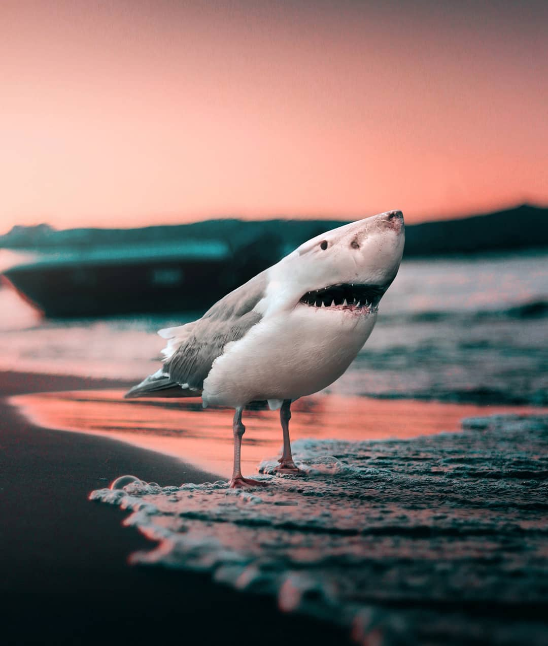 photomanipulation shark
