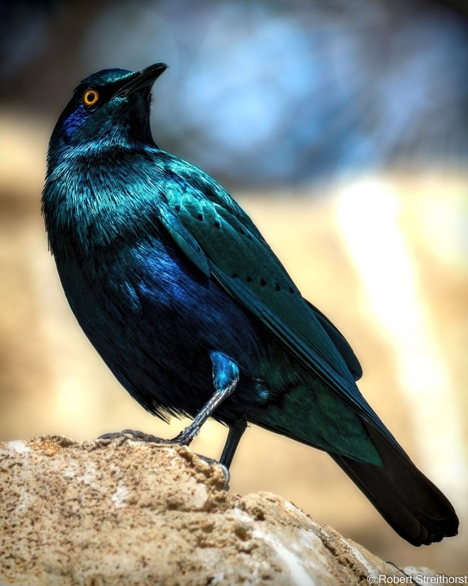 shine light photo bird