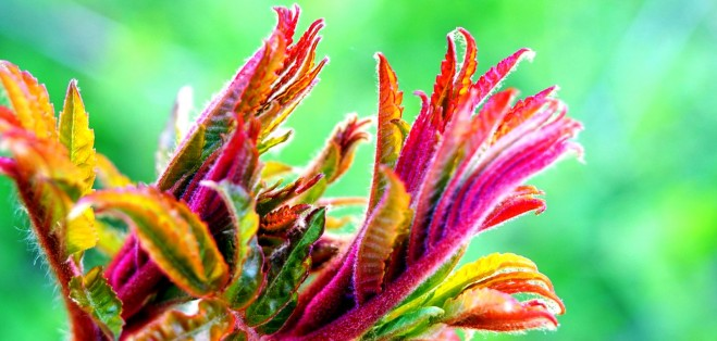 shine light photo leaves