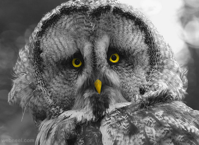 owl bird photography by