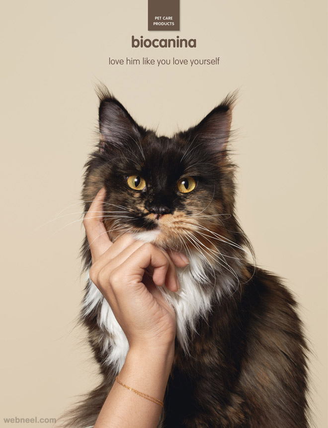 pet care creative animal advertisement biocanina