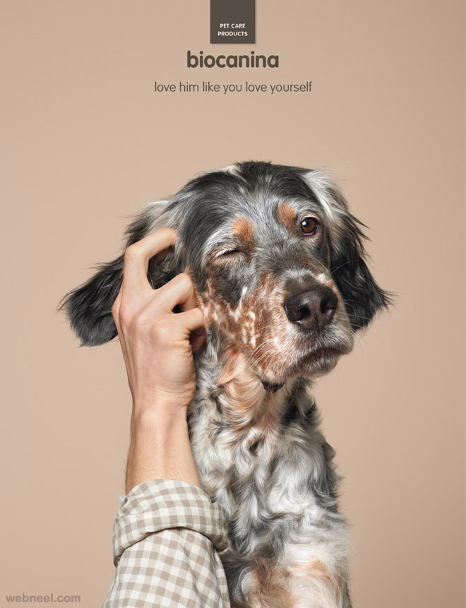 pet care creative animal advertising biocanina