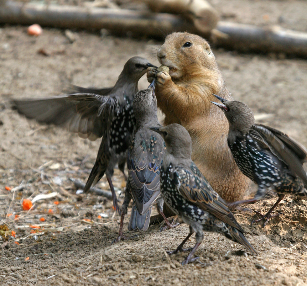 birds food fight photography by tad