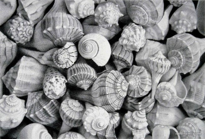 sea shell realistic pencil drawing by mayrolstad