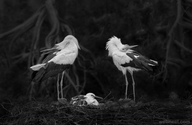 bird family photography