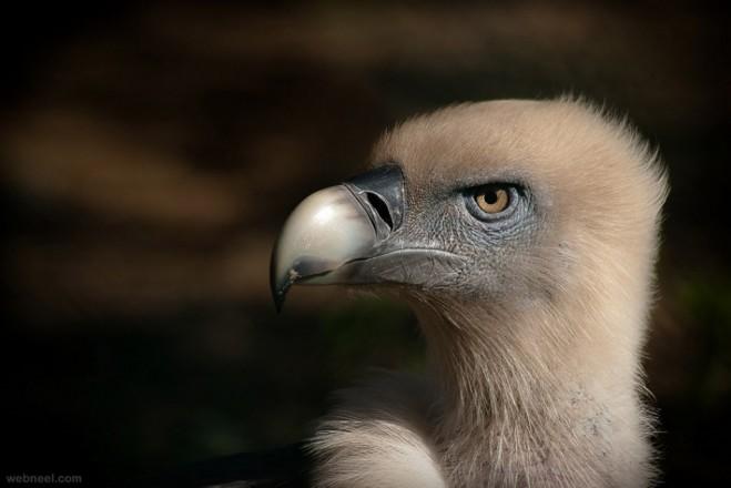 bird photography by martinez