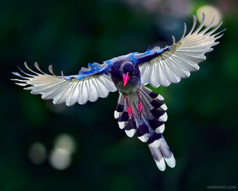 bird photography by john fish