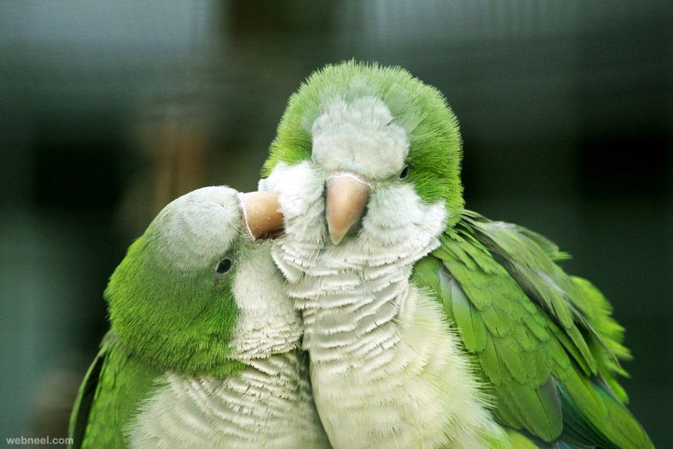 love parrot bird photography