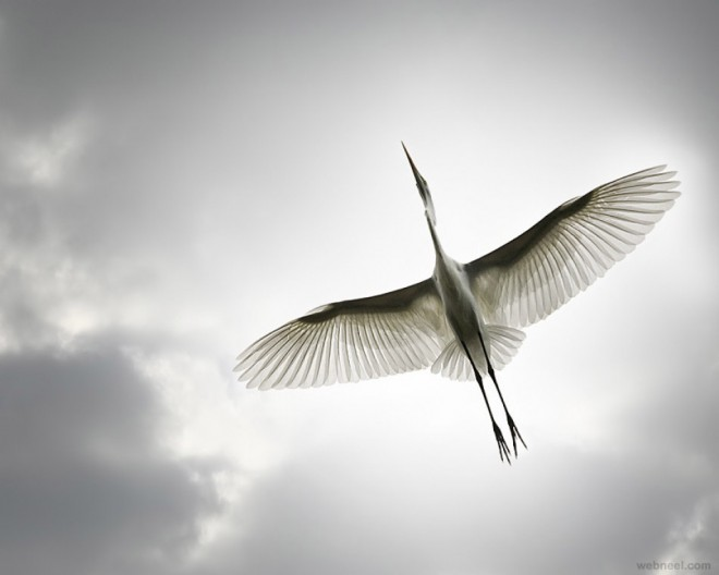 avian bird photography by sandy powers