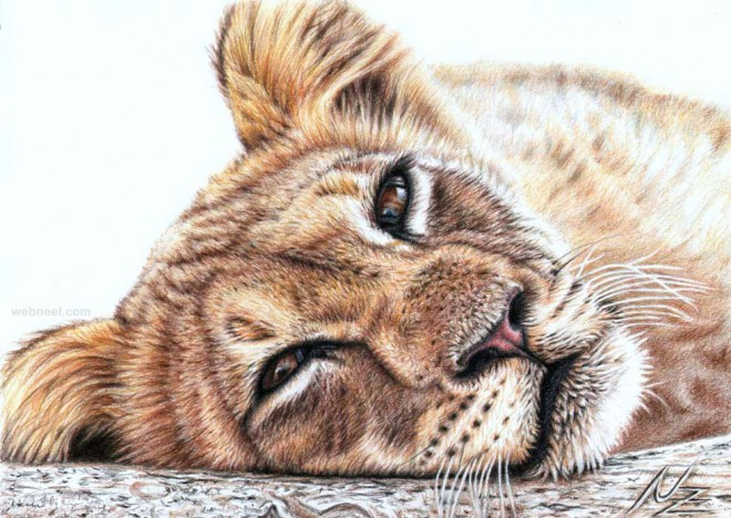 animal drawing tiger nicolezeug