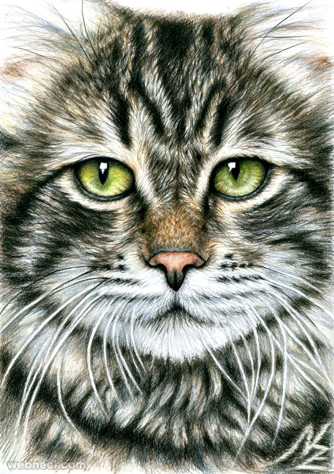 animal drawing cat nicolezeug