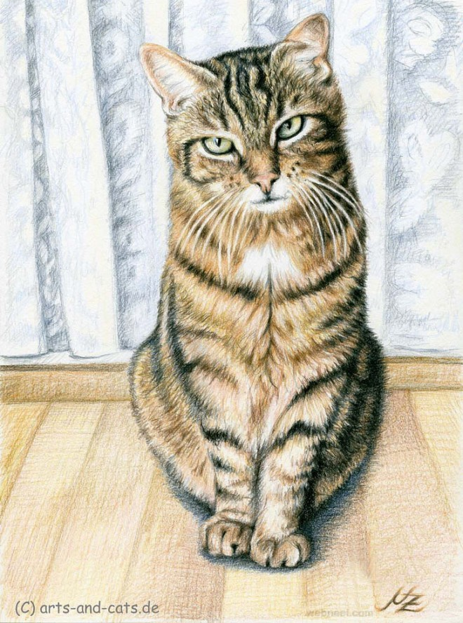 30 Beautiful Cat Drawings Best Color Pencil Drawings And Paintings World Cat Day Aug 8