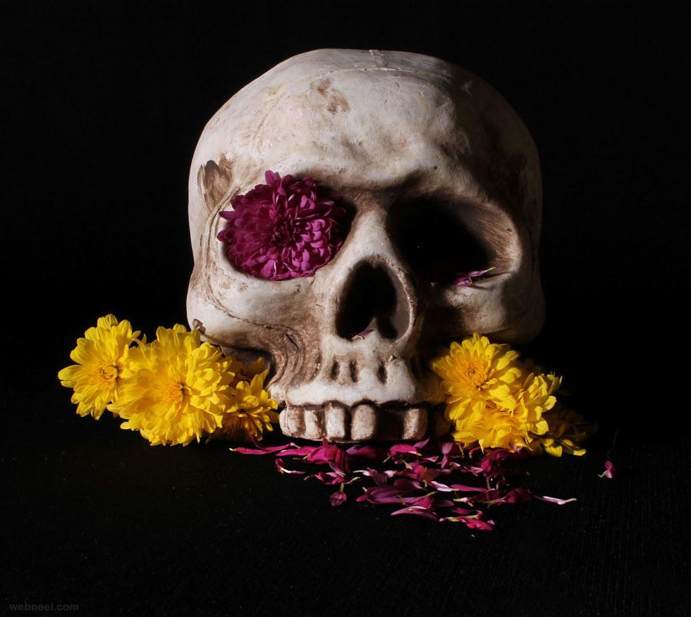 still life photography skull