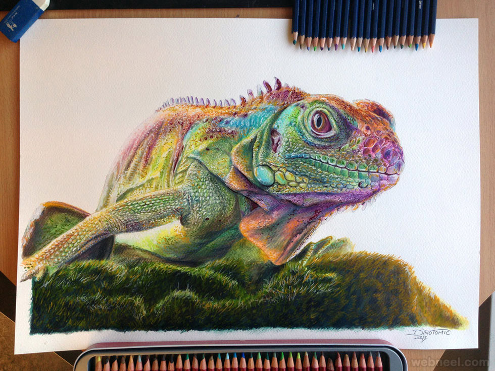 chameleon animal drawing dinotomic