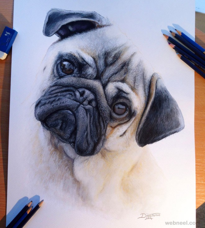 pug dog drawing dinotomic