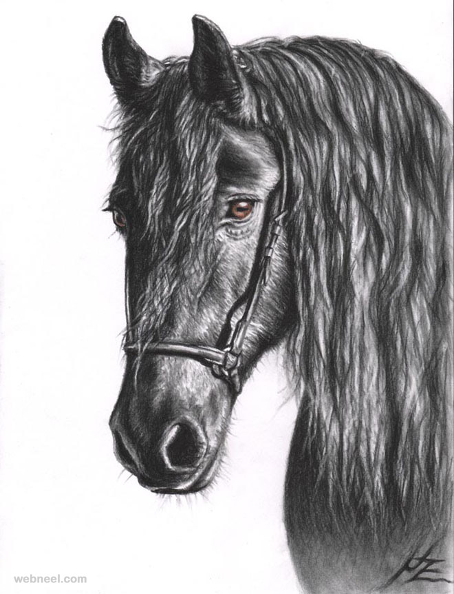 horse drawings animal nicolezeug